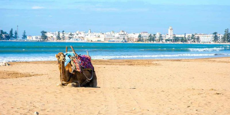 Essaouira Kitesurf and Surf with Free your Mind Experience